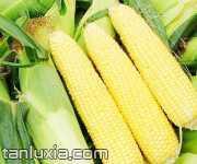 漢南甜玉米