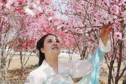 聖母山海棠園景點:海棠花海