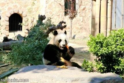 济南动物园景点:大熊猫馆