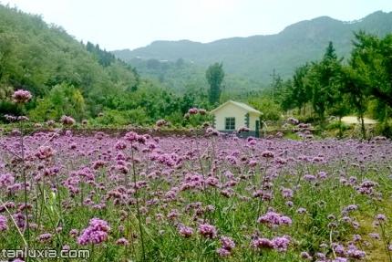 濟南龍集山景點:龍集山香草園