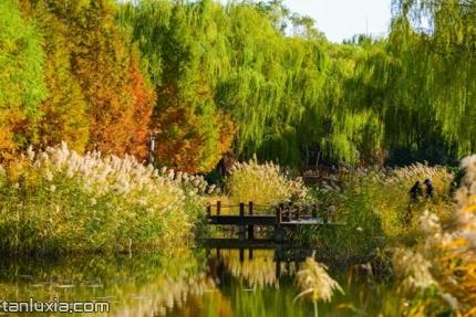 济南森林公园景点:芦花飞扬