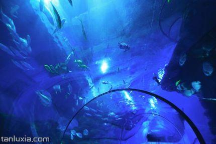 青岛世博园景点:水母大世界