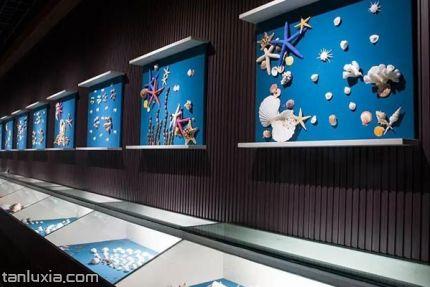 青岛贝壳博物馆景点:贝壳展厅