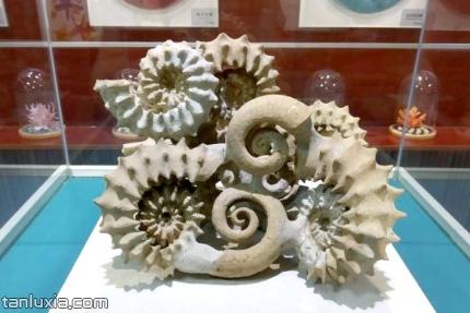 青岛贝壳博物馆景点:贝壳展品
