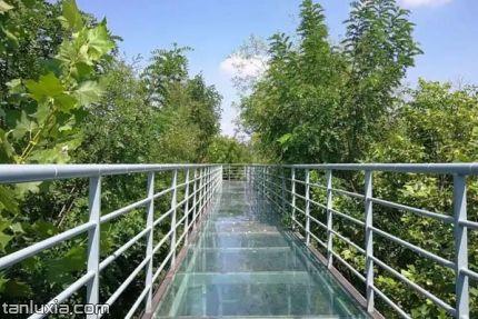 翠林云莊鄉村樂園景點:樹頂玻璃棧道