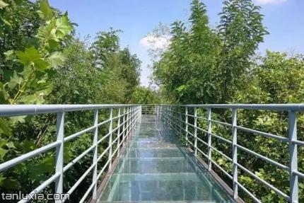 翠林云庄乡村乐园景点:树顶玻璃栈道