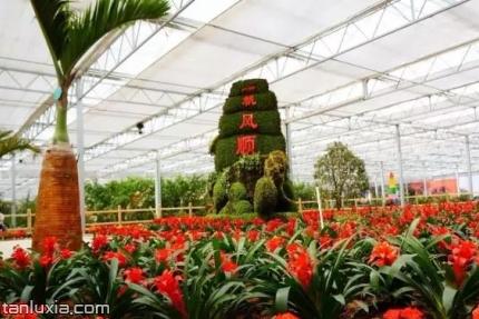 灵珠山植物园景点:植物观赏区