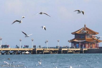 青岛栈桥公园景点:栈桥秋色