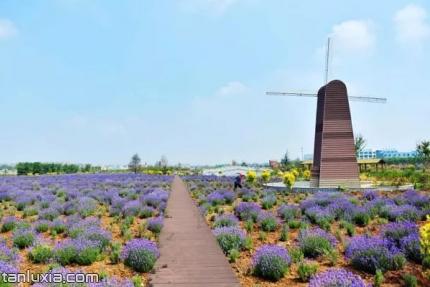 羊毛沟花海湿地公园景点:大风车