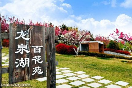 即墨龙泉湖公园景点:龙泉湖百花苑