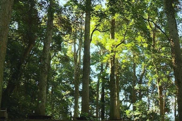 攻略林_南平福建中国政和第一楠木林景区三国大时代楠木攻略秘籍4图片
