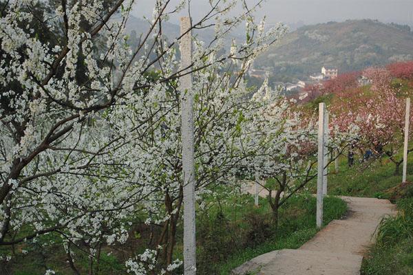 三月赏花好时节 妹子的近效虎峰山游记