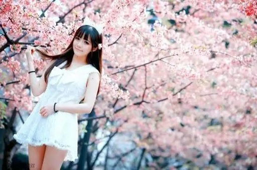 樱花女神降临长寿菩提山,今年的樱花开的格外灿烂