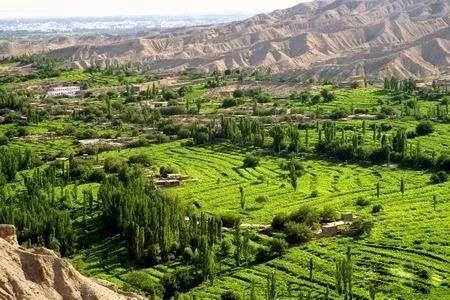 美丽的新疆吐鲁番,甜甜的葡萄,热情的新疆姑娘